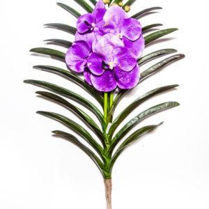 Искусственная орхидея Vanda X2 H71210154