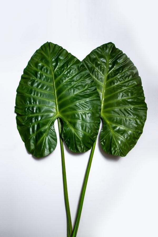 Искусственные листья Алоказии (набор из 2 шт) H144230066