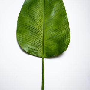 Лист банановый H110231664